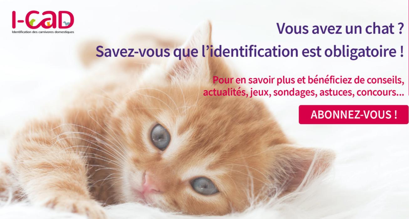 http://www.mairie-grandchamp78.fr/medias/images/i-cad.png